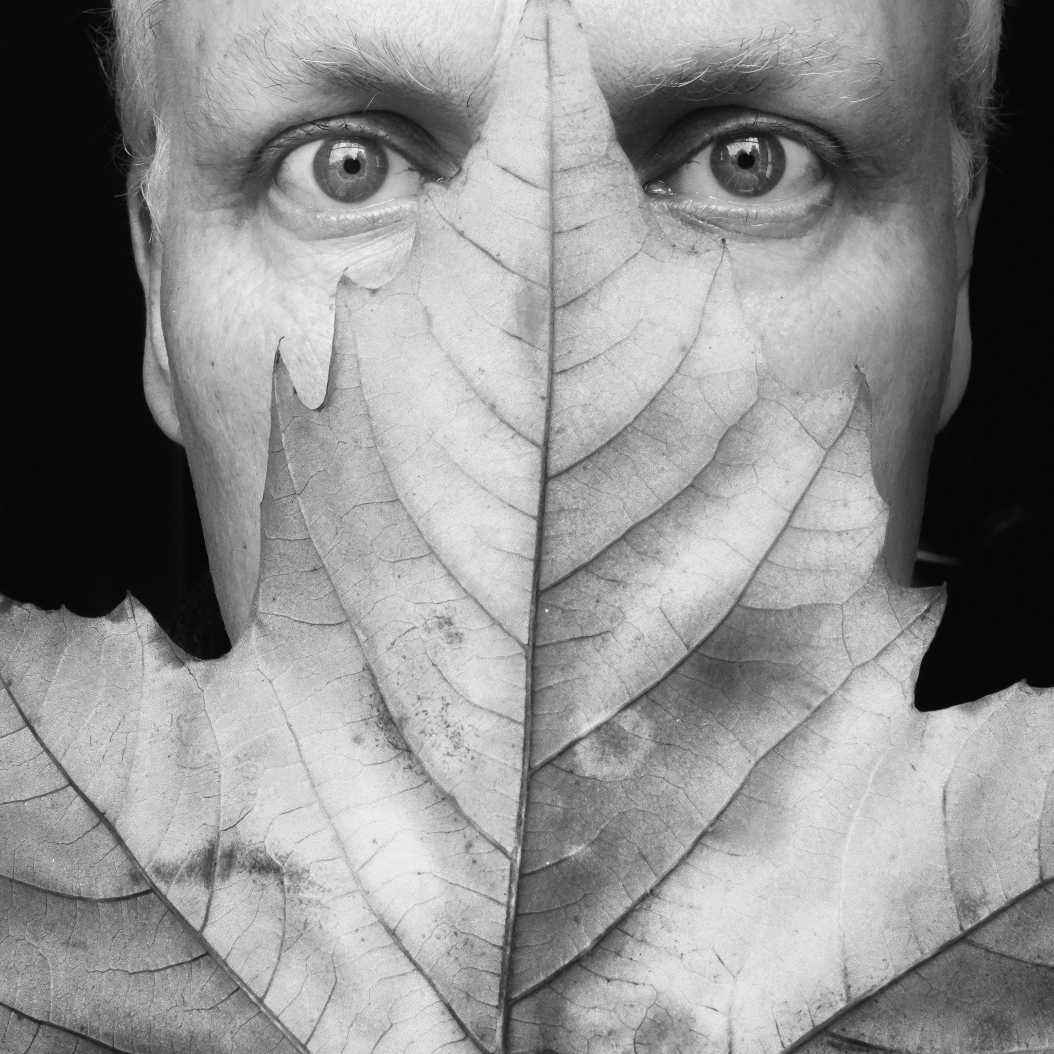 Sunday Selfie - 'Fallen leaf' - Visible Word - photograph (c) David Bailey (not the)