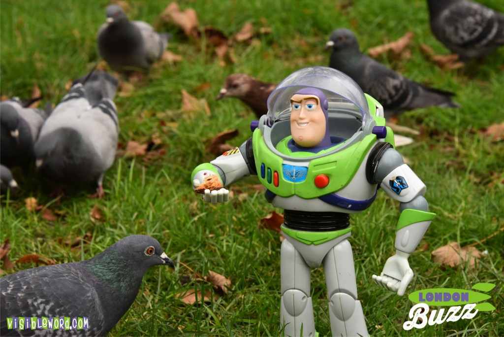 Buzz On Tour - Buzz feeding pigeons in Fulham - photograph copyright David Bailey (not the)