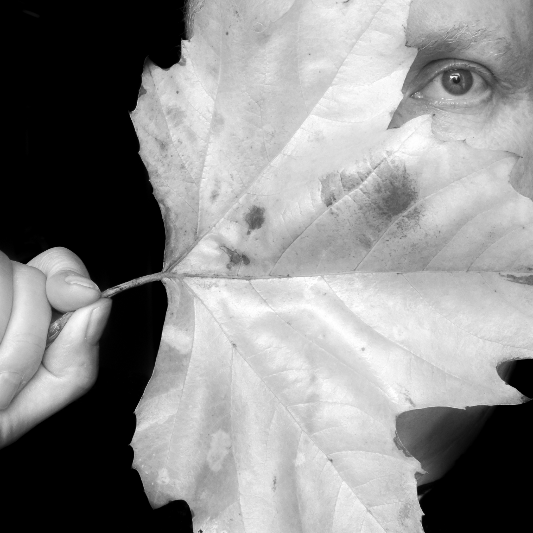 Sunday Selfie - 'Fallen leaf II' - Visible Word - photograph (c) David Bailey (not the)